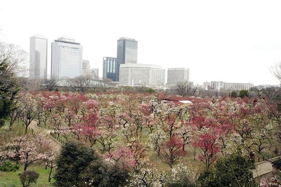 大阪城梅林全景