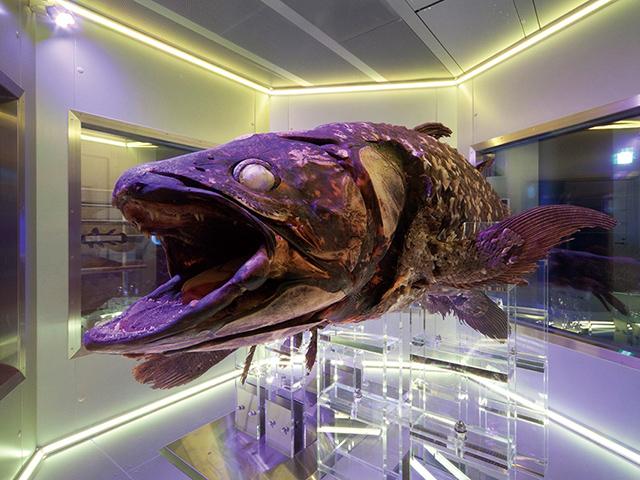 画像:沼津港深海水族館