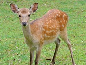 画像:奈良公園に近く、かわいい鹿にも会えます