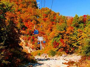 画像:ロープウェイと紅葉