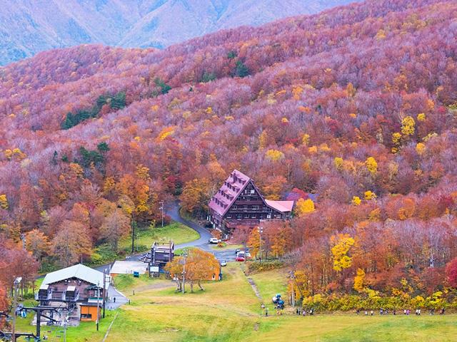画像:蔵王中央高原紅葉