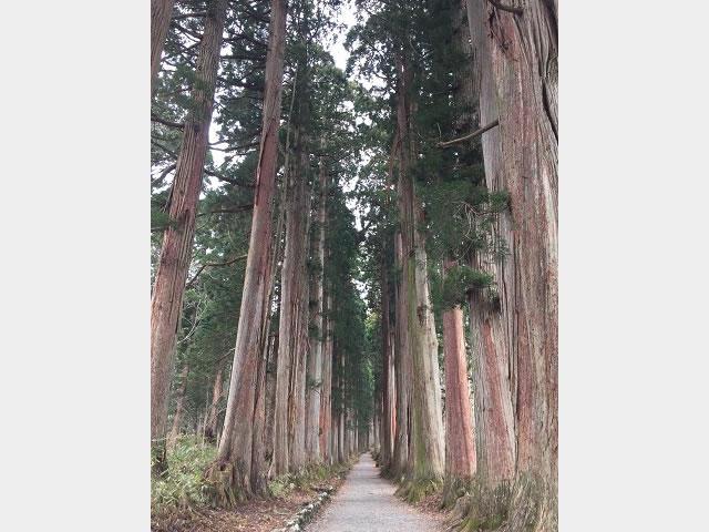 画像:戸隠神社奥社参道杉並木