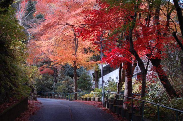 画像:KKR宮の下の紅葉