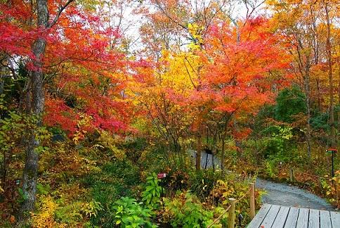 画像:箱根湿生花園