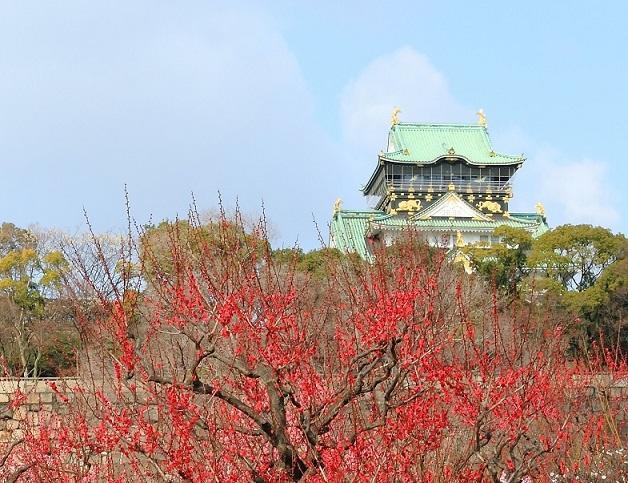 画像:大阪城の梅