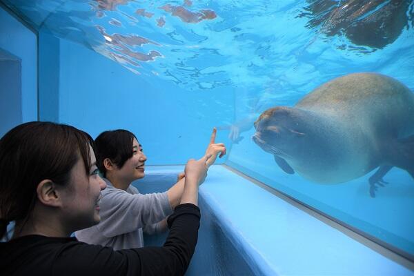 画像:アシカ舎(写真提供:愛媛県立とべ動物園)
